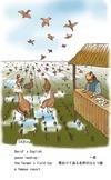 060304_geese_landing_s