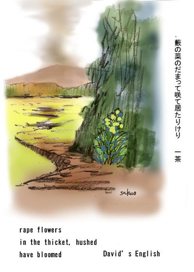 070422_rape_flowers_s